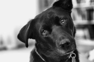 curious-dog